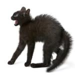 Katzenabwehr