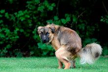 Hundeabwehr