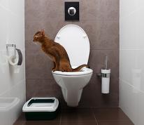 Katzenurin direkt in die Toilette